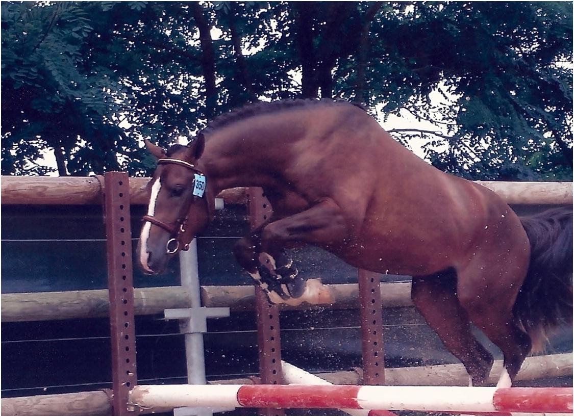 saut équestre 4