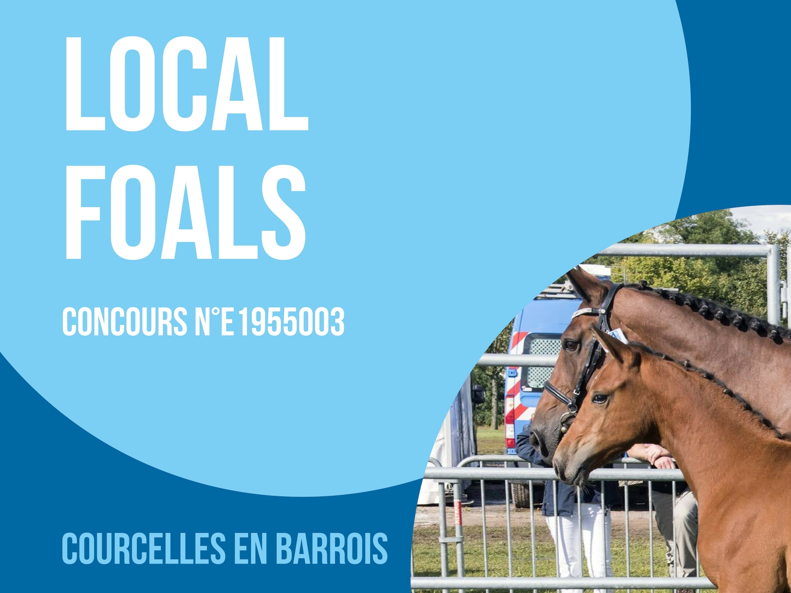 Local Foals - Courcelles en Barrois